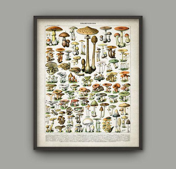 Mushroom Print - Vintage Larousse Mushroom Book Plate Print - Mushroom Illustration - Fungi Art - Fungus Poster - Botanical Science AB448