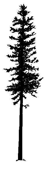 GR03_Pinus_ban_silhouette.gif
