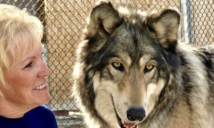Meet Deborah Wood-Schade of Dragonwood Wisdom and Wellness in South Orange County