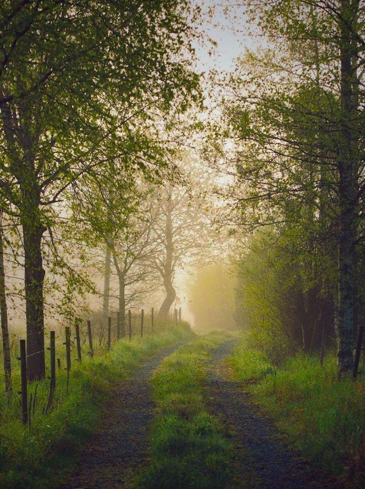 Misty dream (Sweden) by Linus Englund on 500px