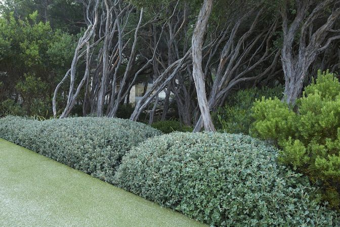 Fiona Brockhoff Design » Coast & country landscape design What a great idea, love the silver colour too