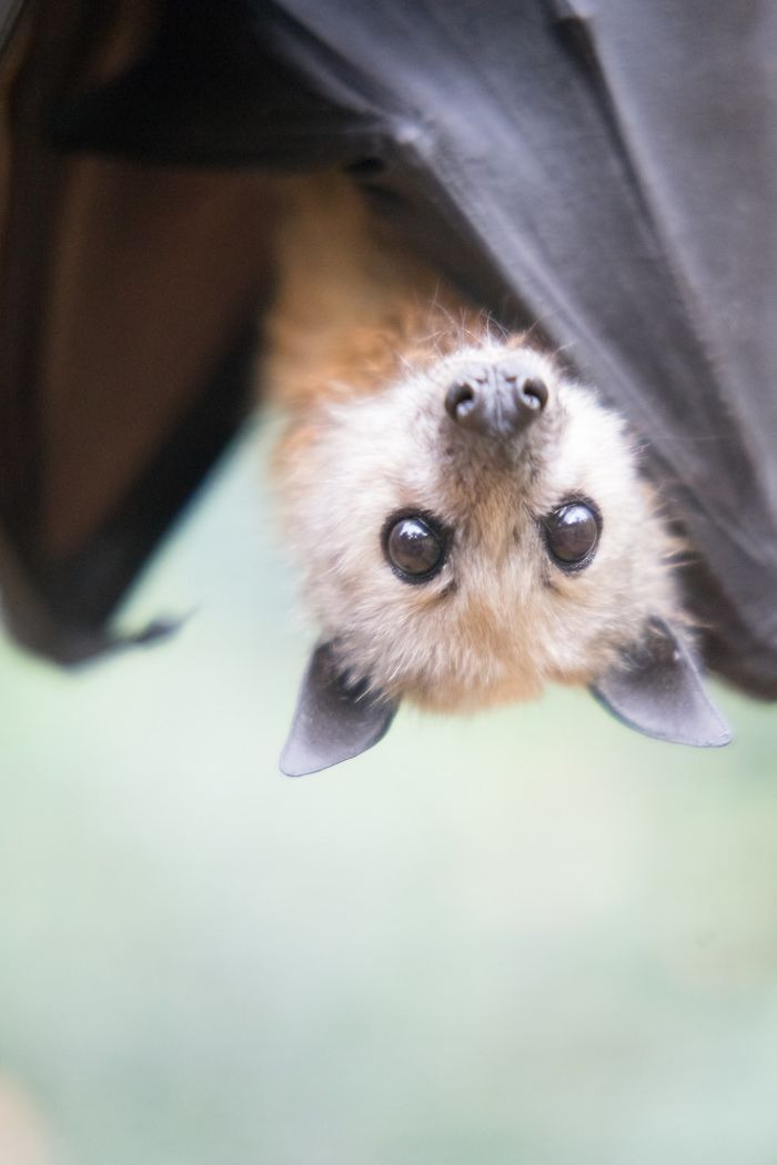 If You Think Bats Are Terrifying These 40 Pics Will Change Your