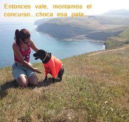 Primer concurso de CAMISETAS MOJADAS para MASCOTAS. Busca las bases en nuestra página y participa. El premio para los dueños, la protagonista, la mascota: www.niguaunimiau.es www.facebook.com/NiGuauNiMiau