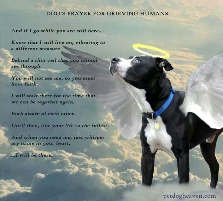 Dog S Prayer For Grieving Humans Animal Anitcs Pinterest Prayer For Dogs And Prayer