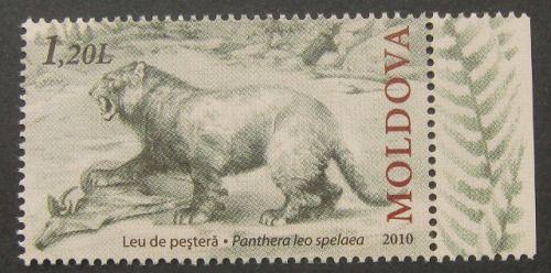 Moldova - Cave lion (Panthera leo spelaea) - 2010 on Flickr.Wikipedia