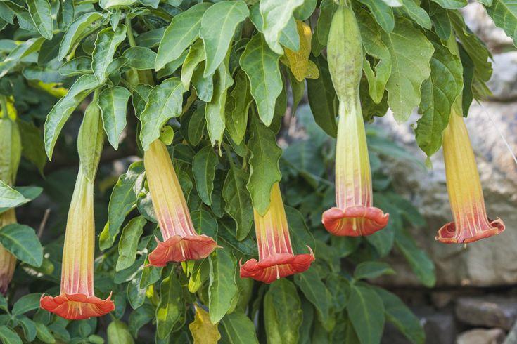 17 meilleures id es propos de fausse plante sur for Plante verte fausse