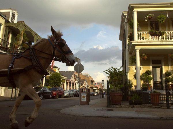 New Orleans, LA: Quarter Hors, Photo