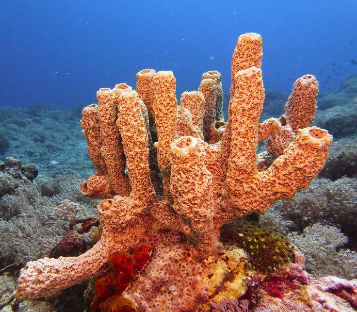 real ocean sponges - 736×643