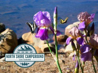 Come visit the North Shore Campground and #RVPark located in #NorthernCalifornia in a town called Lake Almanor - just minutes away from Chester. We have a variety of #RVsites and #Cabinrentals just waiting for you to visit. Go #camping and explore the great #outdoors of the #NorthState with one of our lake view camp sites. You never know what you'll find. Like this beautiful #flowers. Visit northshorecampground.com or email info@northshorecampground.com to find out rental availabilities!