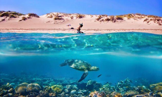 Ningaloo reef turtle: WA