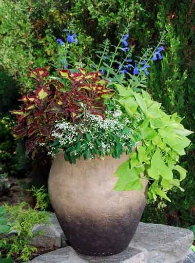 1000 images about urn and planter ideas on pinterest outdoor flower planters sun and planters - Container gardens for sun ...