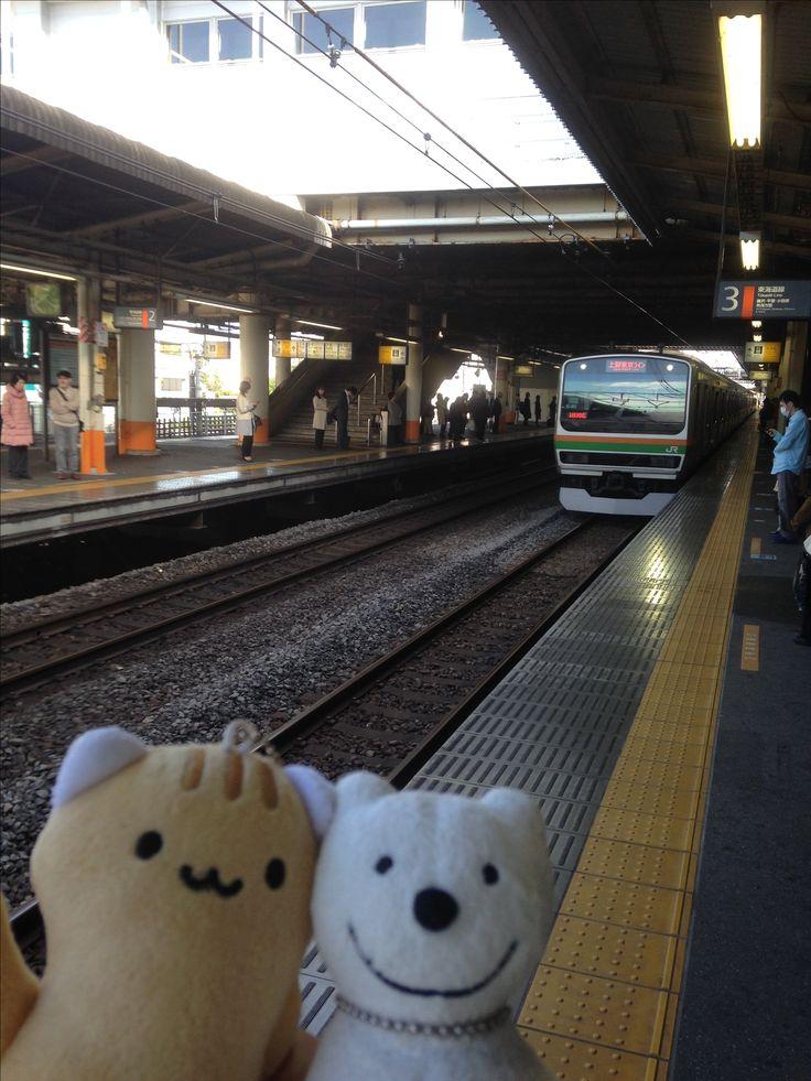 クマ散歩:品行方正なクマは国府津から御殿場線で行った The Bear took the Gotemba Line from Kozu!♪☆(^O^)/  #御殿場線#品行方正#クマ