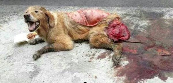 Thousands of dogs and cats are skinned alive and eaten every year for pet meat festivals. Stop the slaughter! (49342 signatures on petition)