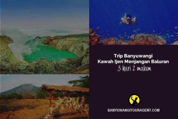 Trip kawah ijen menjangan baluran 3 hari 2 malam adalah paket dengan mengunjungi kawah ijen, pulau menjangan, dan taman nasional baluran selama 3 hari. Info selengkapnya disini