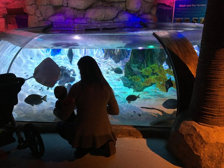 Bring the kiddos to these attractions http://blog.visitdetroit.com/blog/entry/things-to-do-near-the-palace-of-auburn-hills.html?utm_campaign=coschedule&utm_source=pinterest&utm_medium=Visit%20Detroit&utm_content=6%20Things%20to%20Do%20Near%20the%20Palace%20of%20Auburn%20Hills