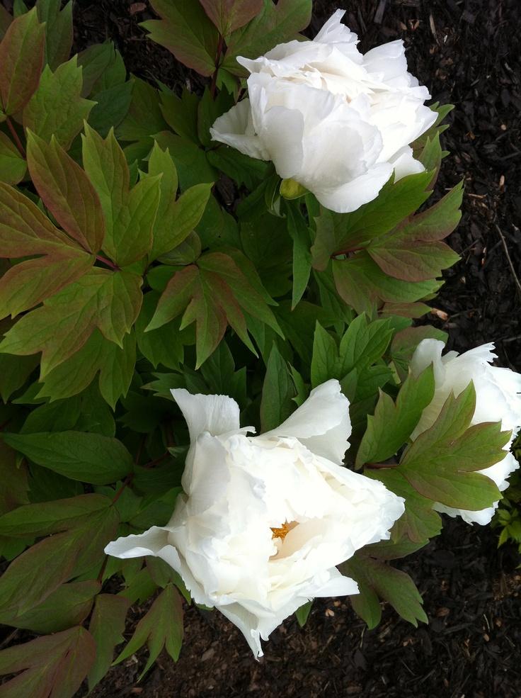 virginia florist fredericksburg