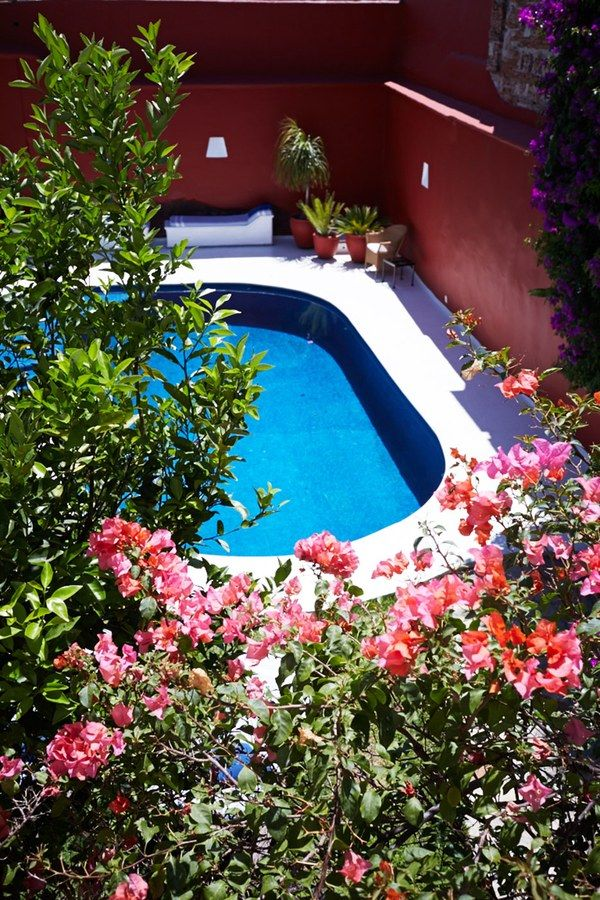 Hot-pink bougainvillea surrounds the pool at the Casa Oaxaca Hotel.