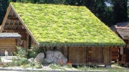 groen dakbedekking - Google zoeken