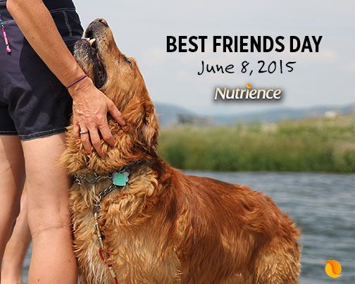 Our dogs are our best friends!