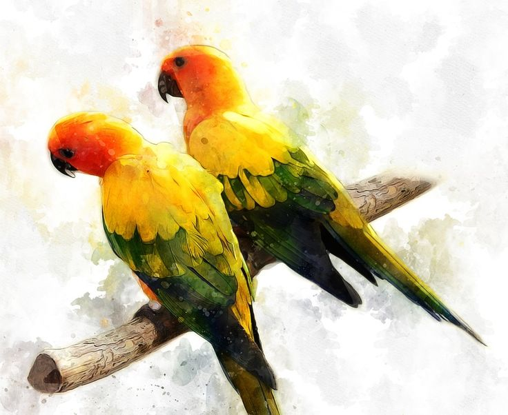 Kostenlose Illustration: Sittich, Papagei, Vogel, Tropisch - Kostenloses Bild auf Pixabay - 2190419