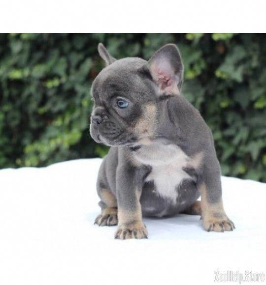 See Our Internet Site For More Details On Bulldogs It Is Actually