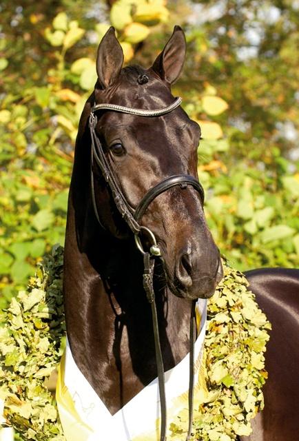 Blue Hors | Stallions | Blue Hors Hotline