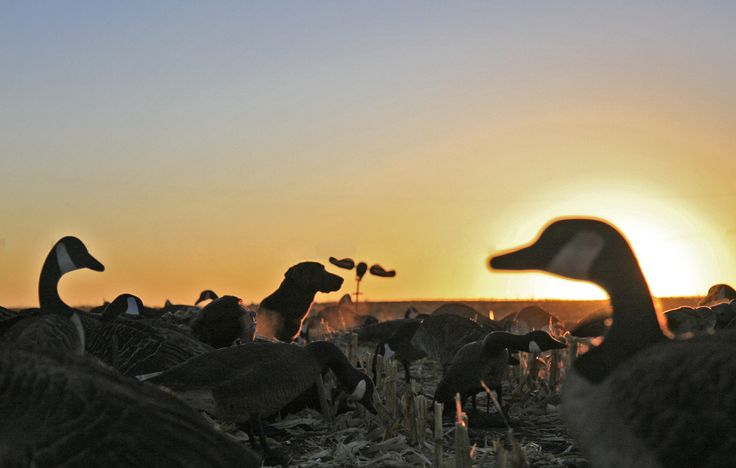 WATERFOWL Hunting,Duck and Goose hunting Photos