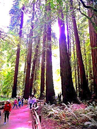 Muir Woods - Things to do in San Francisco, California