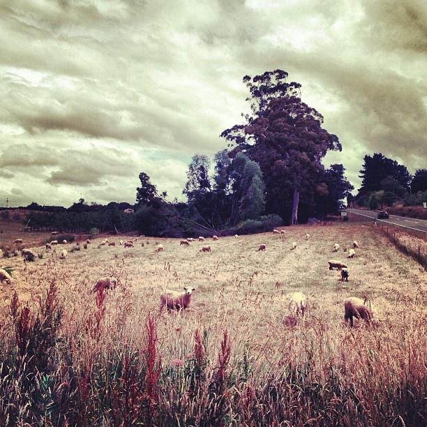 Mapua - Nelson, New Zealand by conradknz, via Flickr