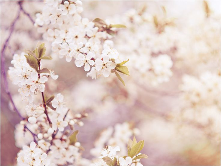 spring by Elena  Khazina on 500px