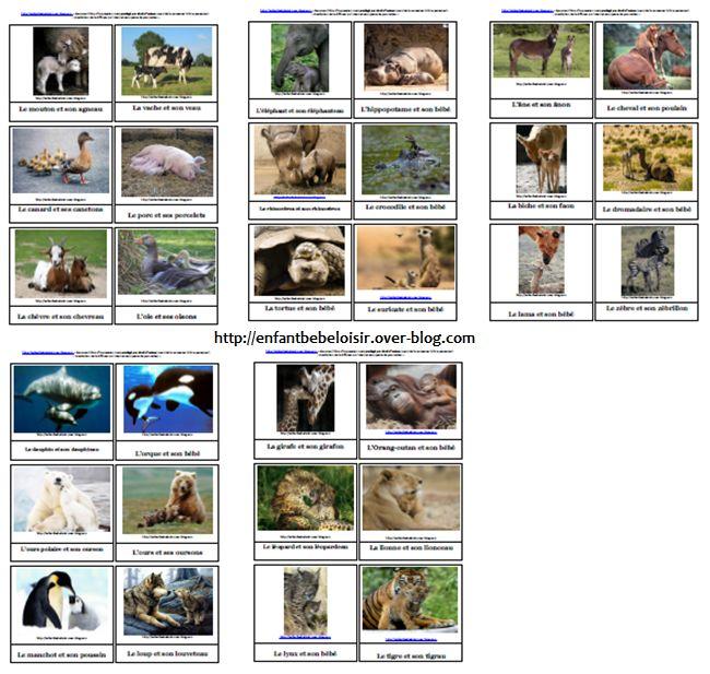Cartes de nomenclature imprimer gratuit en pdf les animaux et leurs b b s - Jeux d hotel pour animaux ...