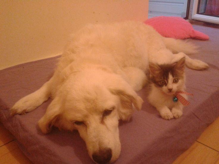 Tasia the cat, a fine company for the last days of Denaki the dog! RIP Denaki!