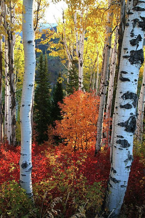 Fall in Utah; photo by Southern Utah Photography*