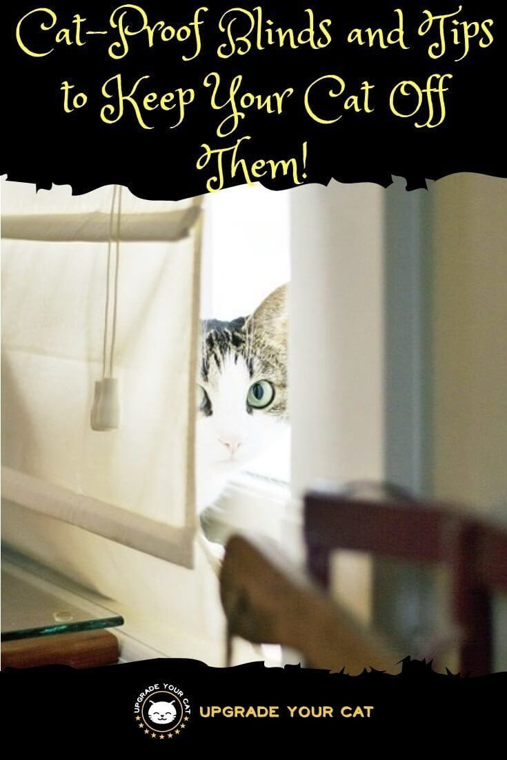 Cat Proof Blinds Plus Tips To Stop Your Kitty Damaging Your Blinds Cat Proofing Cat With Blue Eyes Dancing Cat
