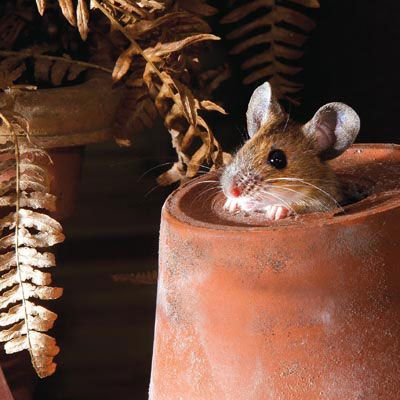 """I'm missy #mouse and I live in the flower pot next to the #garden shed!"" Ladybird greetings card"