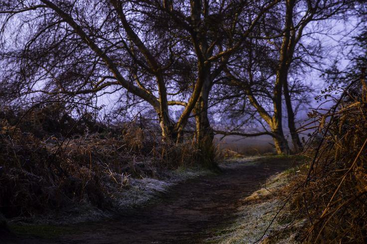 Arne, Dorset UK