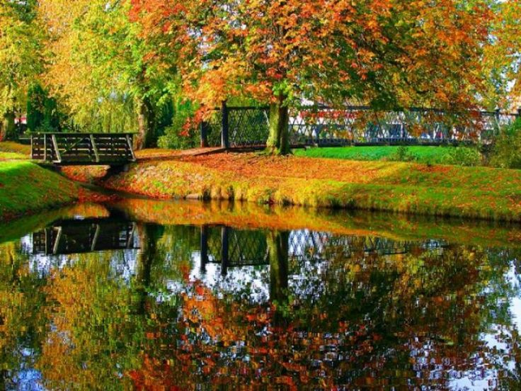fall backgrounds bing images fall pinterest