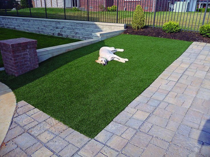 17 Best Ideas About Artificial Grass For Dogs On Pinterest