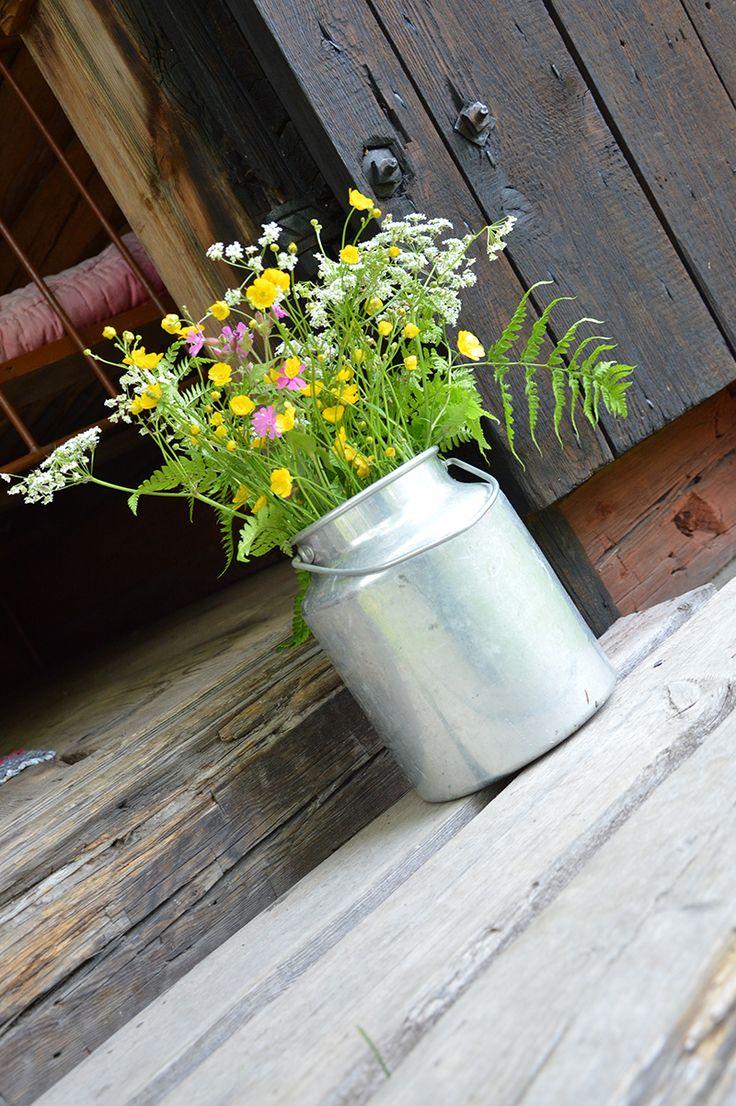 Turkansaaren ulkomuseossa voi istahtaa koivujen katveeseen nauttimaan kesäisestä luonnosta ja maalaismaisemasta. Oulu (Finland)