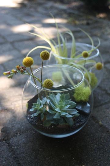 Terrarium dehors : succulente et craspedia globosa (Bright Design Lab)