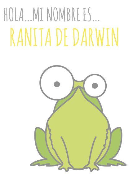 Ranita de Darwin