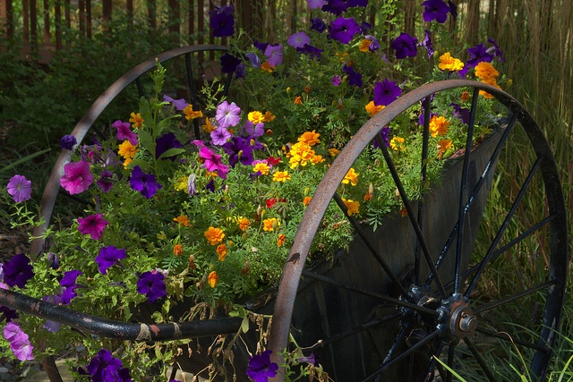 Cart of Flowers by John_K., via Flickr...Oh one day I will score an old wagon cart for just this use!