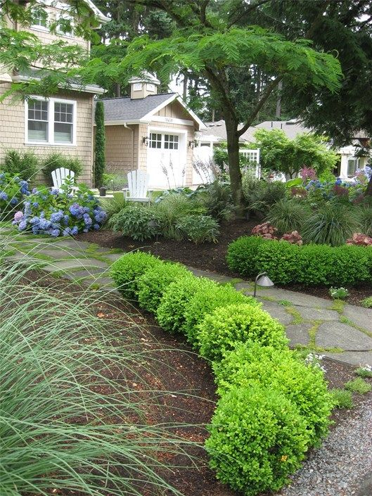 21 best evergreen hedging ideas images on pinterest hedging ideas bildresultat fr low hedge evergreen workwithnaturefo