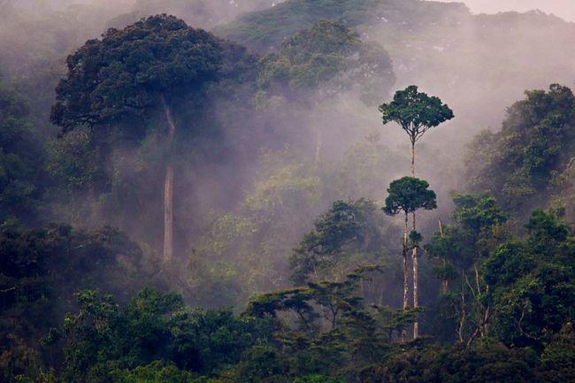 Nyungwe Forest National Park, Rwanda