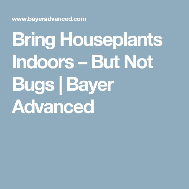 Bring Houseplants Indoors – But Not Bugs | Bayer Advanced