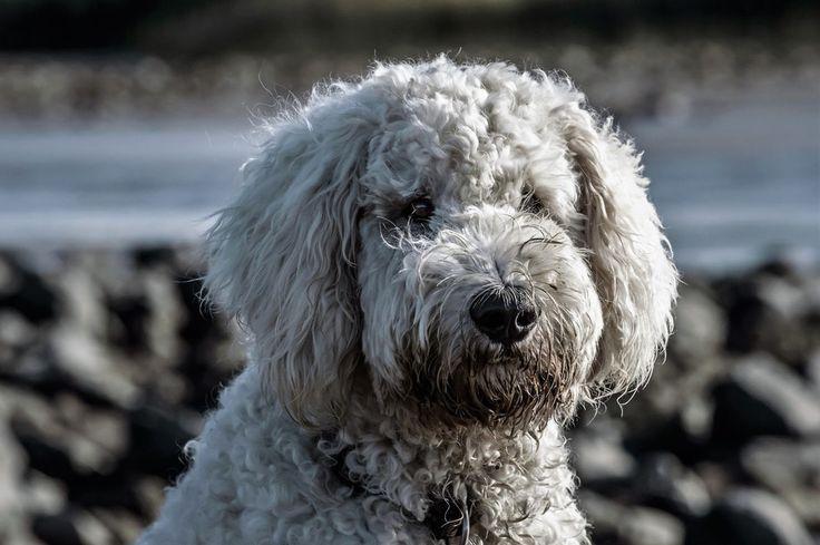 New free stock photo of dirty animal dog #freebies #FreeStockPhotos