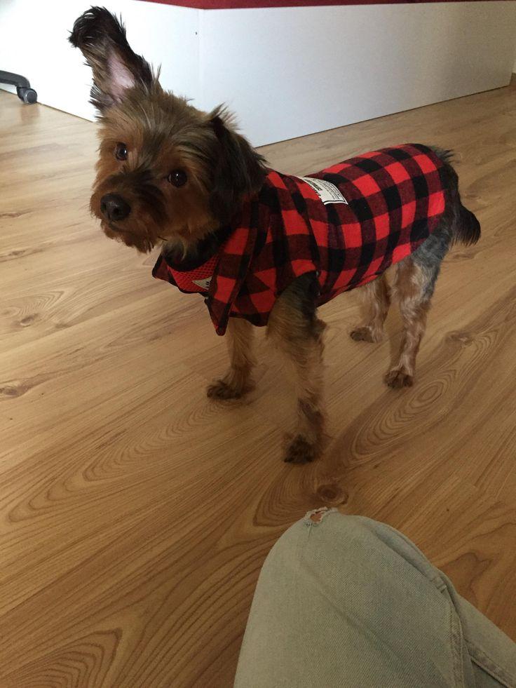 26 besten Dog Essentials Bilder auf Pinterest   Hunde, Haustiere und ...