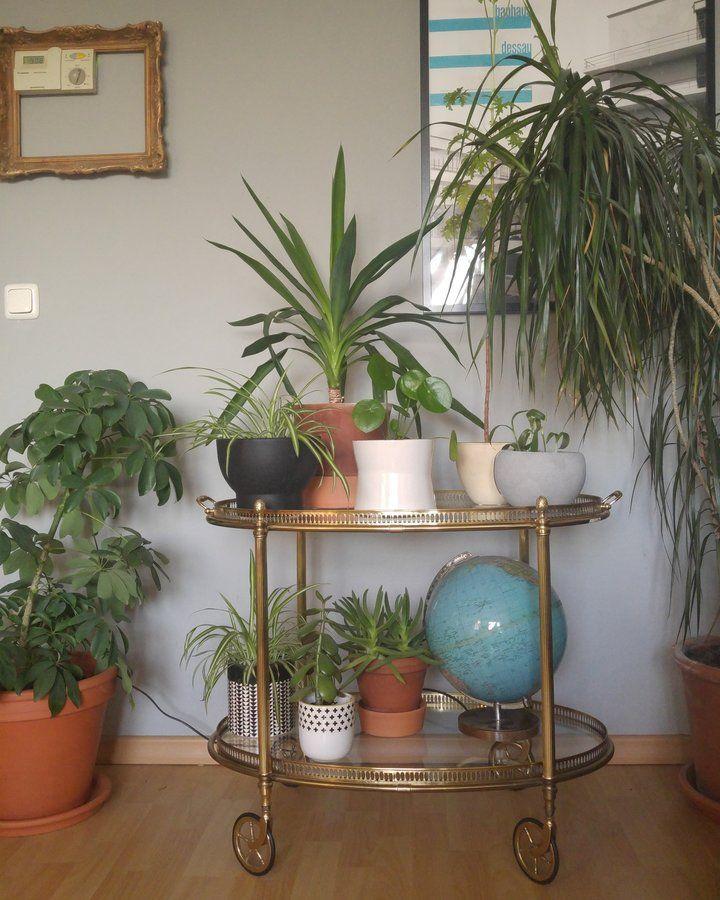 Welcome to the Jungle | http://SoLebIch.de - Foto von Mitglied  #solebich #interior #einrichtung #inneneinrichtung #deko #decor #beistellwagen #barwagen #globus #globe #trolleytable #teacart #barcart #alcoholcart #plant #pflanze #urbanjungle