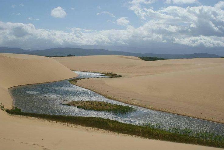 El Parque Nacional Los Médanos de Coro fue decretado el 6 de Febrero de 1974.  En este desierto que cuenta con 91.280 hectáreas podemos encontrar una costa llena de manglares los cuáles son el hábitat y lugar de reproducción de muchas especies marinas.  Especies que están en peligro crítico y sólo se encuentran  en  la  península  de  Paraguaná como la tarantula azul y el oso pigmeo viven allí.  En épocas de continua lluvia se forman oasis como el que vemos en la foto nuestro país tiene…