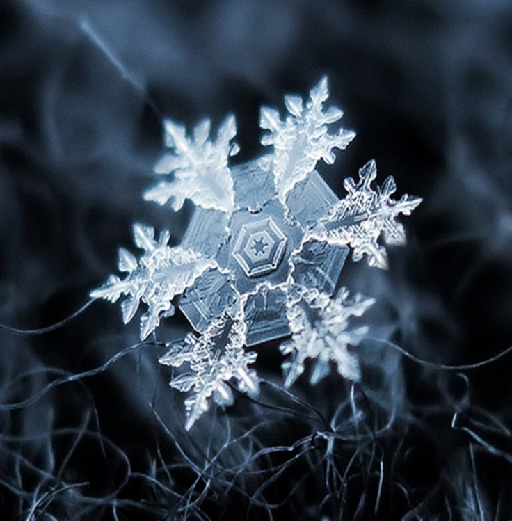 Magnified Snow Flake